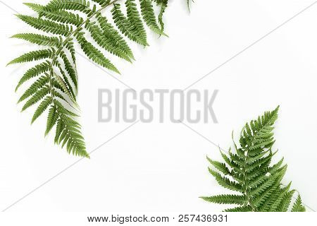 Fern Leaves Background With A Space For A Text, Flat Lay