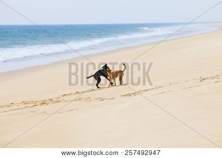 Two Happy Dogs Running And Playing Together On The Beach With Ball