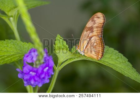 Beautiful Butterfly Sitting On Green Leaves. Tropical Insect In The Natural Habitat.