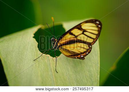 Mariposa Amarilla Y Negro Posada Sobre Hoja Verde
