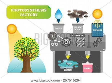 Photosynthesis Factory Infographic Vector Illustration. Scheme With Mill And Plant For Clean Environ