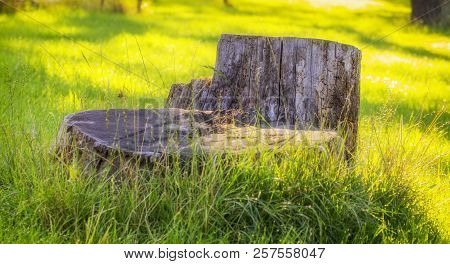 Old Stump On The Green Grass In The Garden, On Backyard