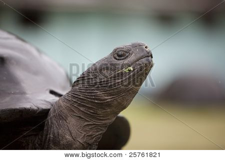 Close up of a turtle's snout