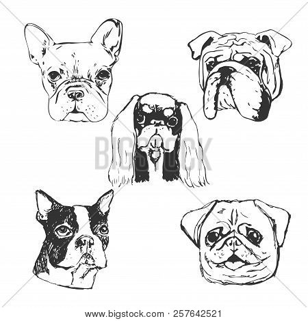 Dog Vector Illustration. Hand Drawn Dog Portraits. Sketch Of Purebred Small Dogs. T-shirt Print Idea