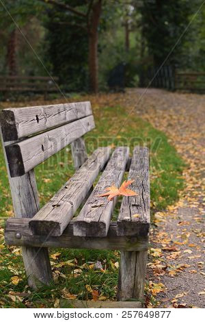 Loneliness concept Autumn Fall Bench Maple leaf Copy space Solitude Depression New start Procrastination poster