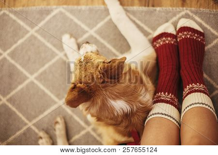 Festive Socks On Girl Legs And Cute Golden Dog Sitting On Floor In Festive Room. Relax Time. Cozy Wi