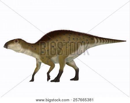 Brachylophosaurus Juvenile Dinosaur 3d Illustration - Brachylophosaurus Was A Herbivorous Hadrosaur
