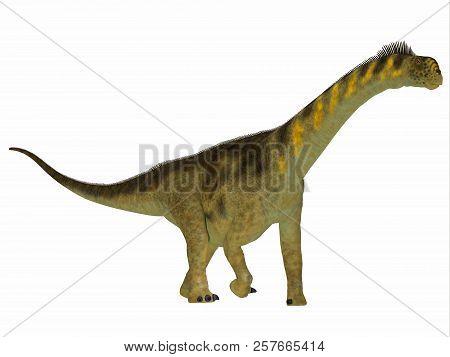 Camarasaurus Dinosaur Side Profile 3d Illustration - Camarasaurus Was A Herbivorous Sauropod Dinosau