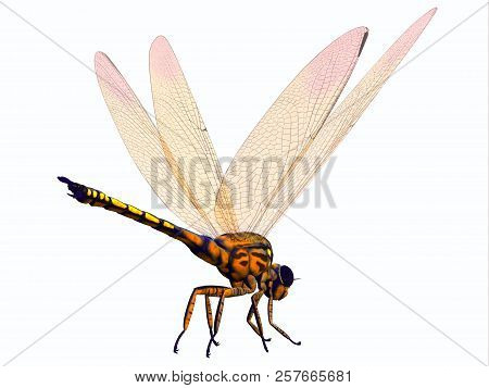 Meganeura Dragonfly Tail 3d Illustration - Meganeura Was Extremely Large Carnivorous Dragonfly Insec