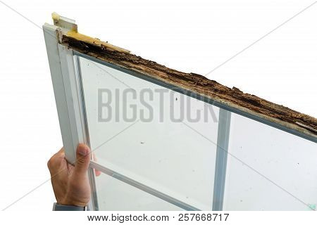 Man Holding A Damaged Window With Wet Rot In The Top Of The Wooden Frame During Replacement In Prepa