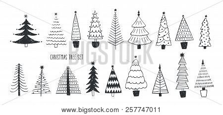 Collection Of Various Firs, Pines Or Spruces Drawn With Contour Lines. Bundle Of Winter Coniferous F