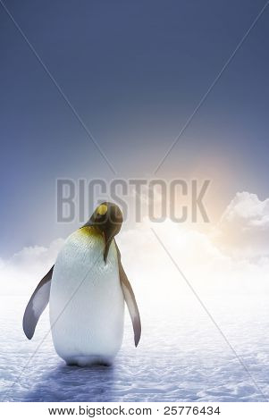 Lonely Emperor Penguin Sunrise
