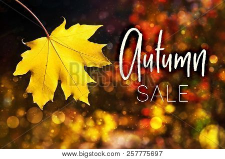 Illustration. Autumn Leaf Fall. Beauty Nature Background