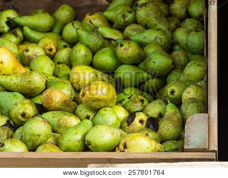 Heap Of Ripe Organic Green Yellow And Brown Conference Pears In Big Garden Wood Box At Farmers Marke
