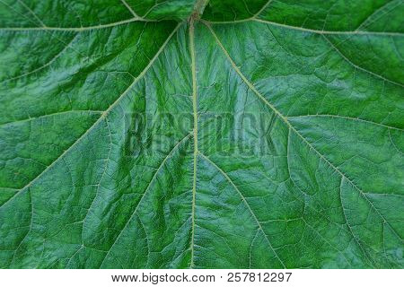Natural Vegetative Background From A Piece Of Green Fresh Leaf