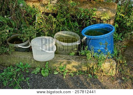Row Of Plastic Buckets With Water In Green Grass On The Street