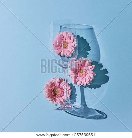 Glass of wine with pink gerberas and a reflection of shadows on a blue background. A springy concept, a postcard. Copy space for text. Flat lay