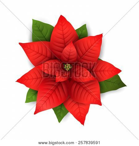 Poinsettia Flowers Isolated Icon For Christmas Or New Year Greeting Card Design. Vector Realistic Po