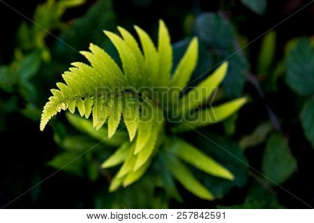 Twisty Spiral Fern Growing In A Bed Of Green Leaves