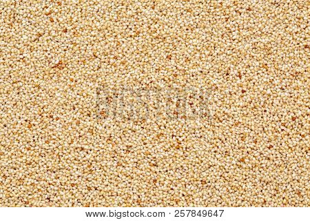 gluten free ivory teff grain background - important food grain in Ethiopia and Eritrea poster