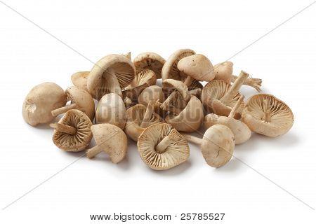 Fresh Scotch bonnet mushrooms on white background poster
