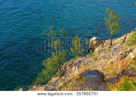 A Pine On The Shore Of Olkhon Island On Lake Baikal