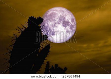 Full Moon Back Silhouette Cactus In Desert Land
