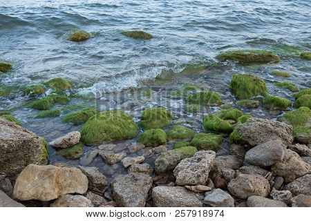 Sea Shore With Rocks And Seaweed. Seaweed On The Beach. Rocky Sea Shore.