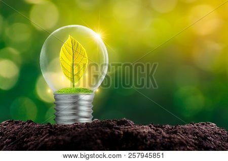 The Bulb Is Located On The Inside With Leaves Forest And The Trees Are In The Light. Concepts Of Env