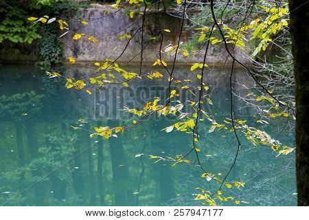 Green Lake In The Forest. Forest Lake With Clear Water. Forest Landscape With A Lake.