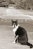 Kitty cat with attitude blocking sidewalk poster