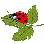 Ladybird sitting on the green leaf vector illustration. poster
