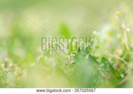 Close Up Of Grass Nature Background Nature Background Of Grass In Meadow. Green Nature Background. N