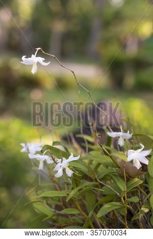 Small White Flowers In A Sunny Clearing, Soft Focus.