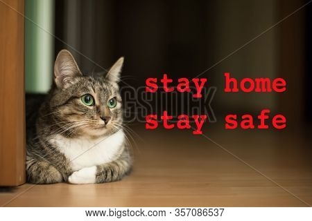 Stay Home Stay Safe Concept With Domestic Cat Portrait And Red Text. Spending Time Home During Coron