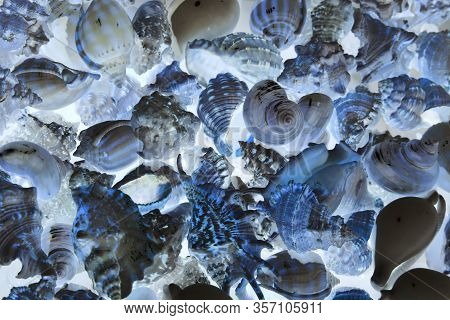 Seashells Background. Various Empty Shells Of Marine Crustaceans In A Tourist Stall