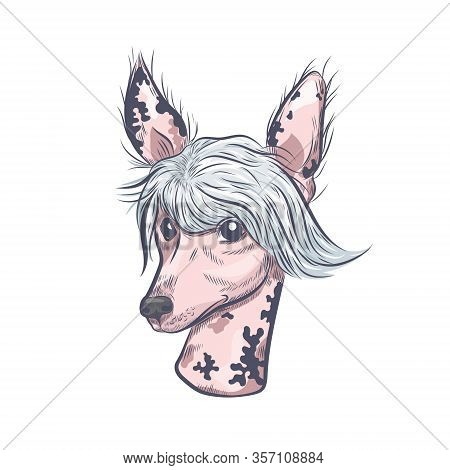 Chinese Crested Dog Hand Drawn Vector Sketch. Chinese Crested Dog Head Isolated On White Background.
