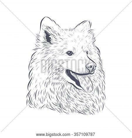 Samoyed Dog Vector Isolated. Samoyed Dog Head Panting On White Background.