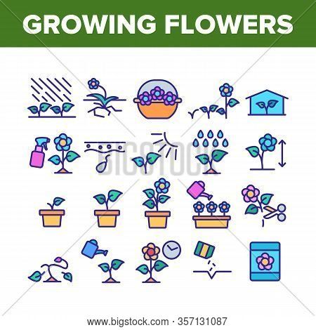 Growing Flowers Plants Collection Icons Set Vector. Growing Flowers In Greenhouse And Pot, Planting,