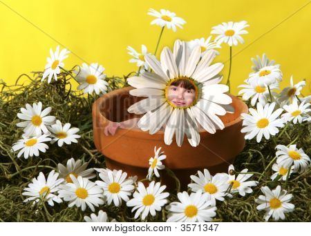 Sitting In A Pot Of Flowers