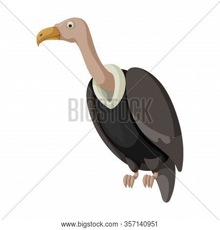Vulture Bird Vector Icon.cartoon Vector Icon Isolated On White Background Vulture Bird.
