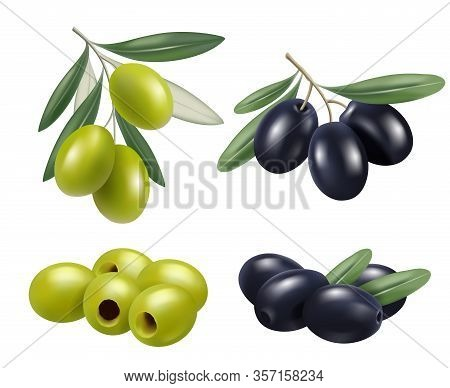 Olive Realistic. Greek Nature Food Olive Branches Relax Spa Oil Vector Symbols. Illustration Olive F
