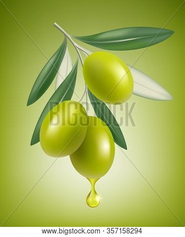 Olive Drop. Natural Branch With Splashes Of Transparent Oil Vector Closeup Drop Vector Realistic Gre