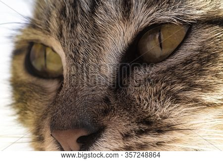 Cats Are Good At Detecting Movement In Low Light, Have An Acute Sense Of Hearing And Smell, And Thei