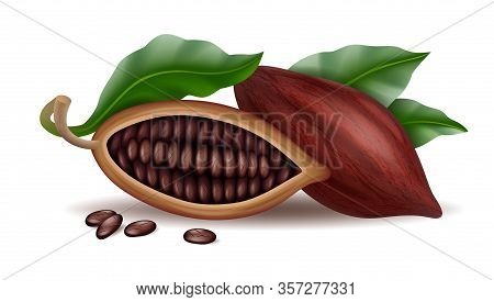 Realistic Raw And Dry Cocoa Thee Pods, Beans And Branch With Green Leaf