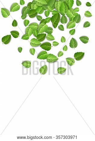 Flying Green Leaves On White Background. Spring Leaf Vertical Pattern On Isolated Backdrop. Fall Fre