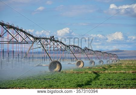Agricultural Irrigation For Crop Farms Are Using The Wheel Or Radial Irrigation Systems For Watering