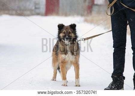 Medium-sized Dog With Thick Shaggy Coat Stands Near Leg Of Human Keeping Leash Looking Forward Cauti