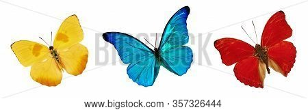Set Of Beautiful Blue, Yellow And Red Butterflies. Cymothoe Excelsa Isolated On White Background. Bu