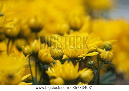 A Beautiful Potpourri Flowers In Yellow Color